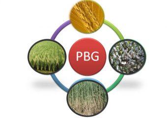 PLANT BREEDING & GENETICS DIVISION